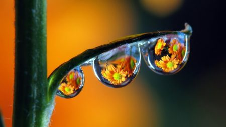 drops, dew, colorful