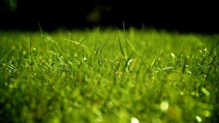 drops, dew, grass