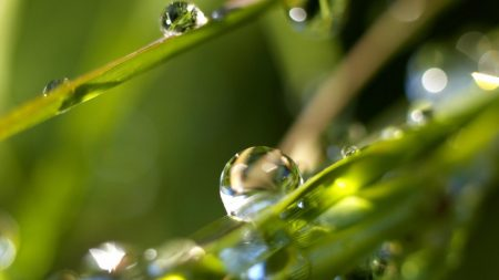 drops, dew, leaves