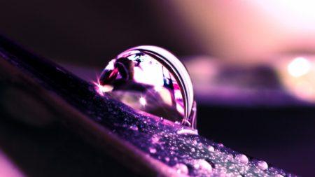 drops, dew, petal