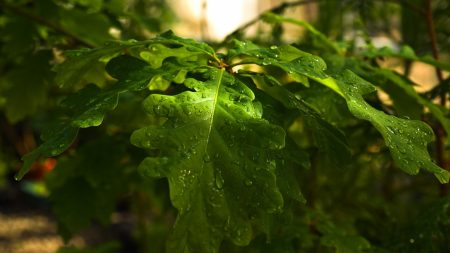 drops, forest, wood
