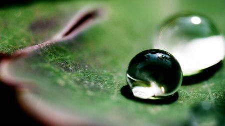 drops, huge, leaves