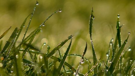 drops, morning, dew