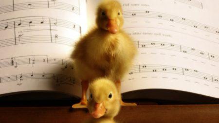 ducklings, music, steam