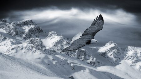 eagle, mountain, sky