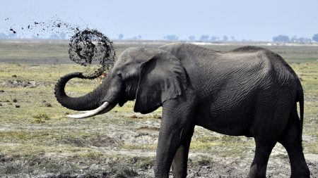 elephant, dirt, splash