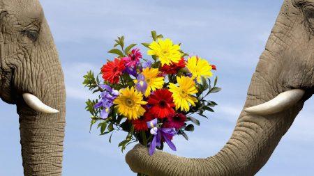 elephant, flowers, bouquet