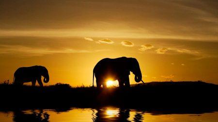elephants, sunset, nature