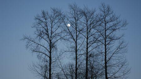 evening, moon, sky