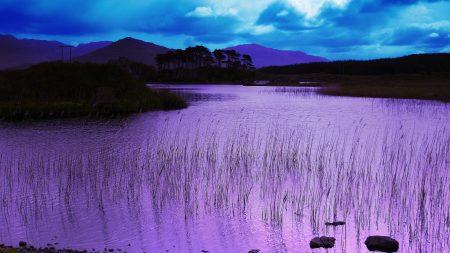 evening, water, grass
