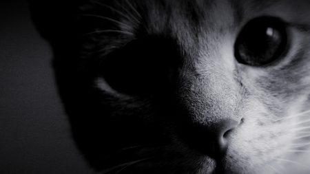 eyes, cat, muzzle