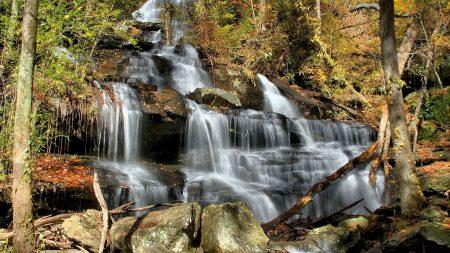 falls, cascades, wood