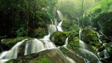 falls, moss, wood