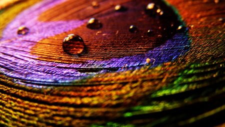 feather, surface, drops