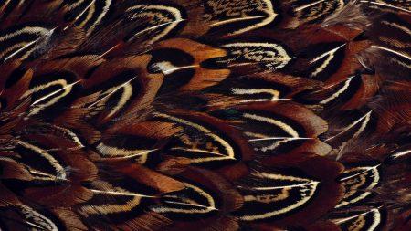 feathers, bird, black