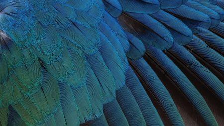 feathers, black, background