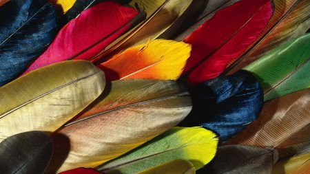 feathers, colorful, background