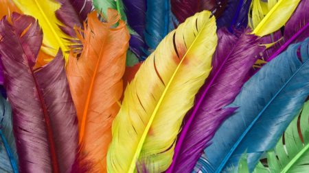 feathers, colorful, bright