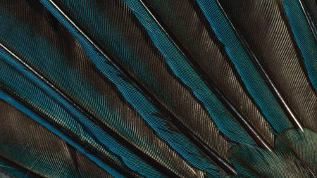 feathers, peacock, background