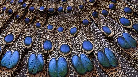 feathers, peacock, light