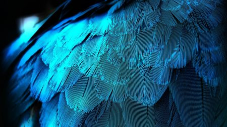 feathers, texture, background