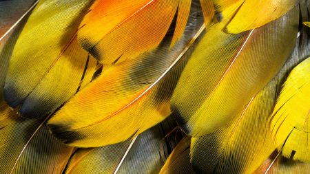 feathers, texture, light