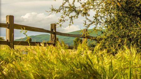 fence, grass, field