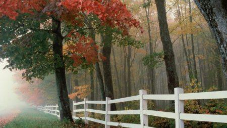 fence, trees, fog