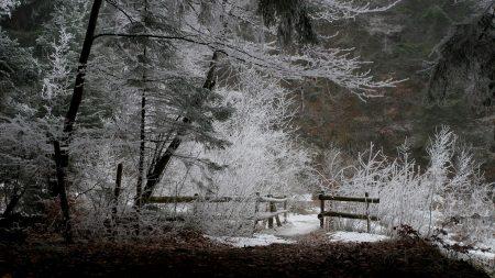 fence, wood, winter