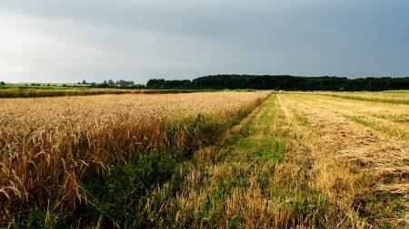 field, agriculture, ukraine