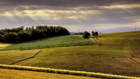 field, arable land, agriculture