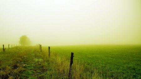 field, fence, fog