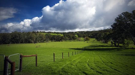 field, fence, pasture