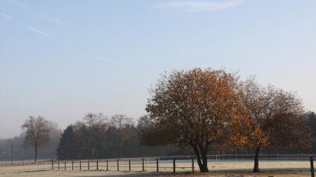field, fence, trees