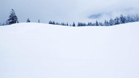 field, fir-trees, snow