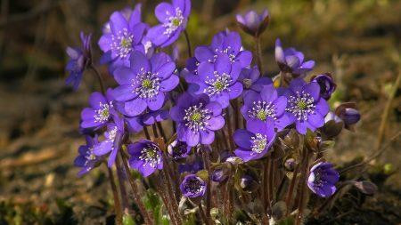 field, flowers, bloom