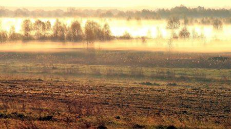 field, fog, morning