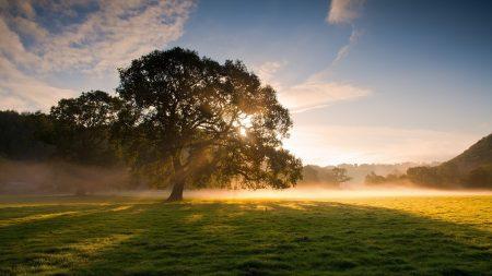 field, grass, tree