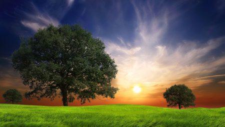 field, grass, trees