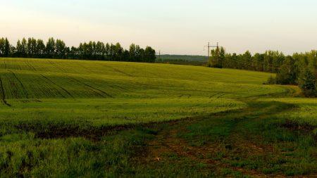 field, green, cloudy