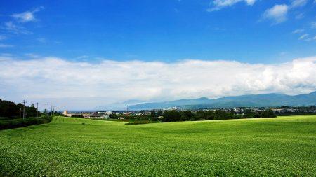 field, japan, plantation