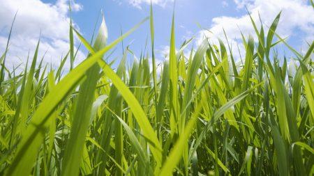 field, leaves, sky