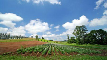 field, plantation, summer