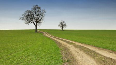 field, road, dirt