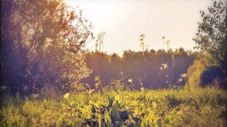 field, russia, herbs
