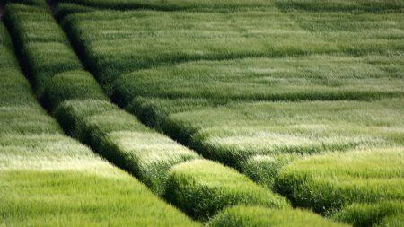 field, traces, grass
