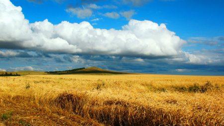 field, wheat, autumn