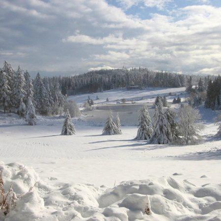 field, winter, snow