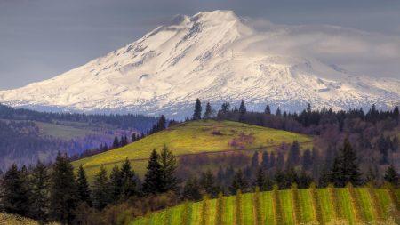 fields, mountain, top