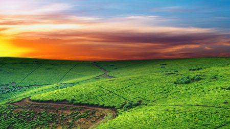 fields, plantations, hills